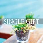 SingleGift1